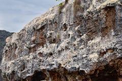 Εθνικό πάρκο Vallarta αψίδων υποθαλάσσιο ή θαλάσσιο πάρκο Las Peñas Los Arcos ή οι βράχοι, με μια μεγάλη ποικιλία του includi θα Στοκ Εικόνες
