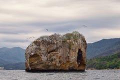 Εθνικό πάρκο Vallarta αψίδων υποθαλάσσιο ή θαλάσσιο πάρκο Las Peñas Los Arcos ή οι βράχοι, με μια μεγάλη ποικιλία του includi θα Στοκ φωτογραφία με δικαίωμα ελεύθερης χρήσης