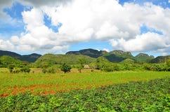 Εθνικό πάρκο Vinales, Κούβα στοκ εικόνα με δικαίωμα ελεύθερης χρήσης