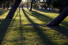εθνικό πάρκο yanchep Στοκ εικόνα με δικαίωμα ελεύθερης χρήσης