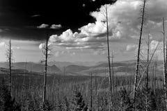 Εθνικό πάρκο Yellowstone στοκ εικόνα με δικαίωμα ελεύθερης χρήσης