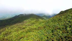 Εθνικό δρυμός Πουέρτο Ρίκο EL Yunque απόθεμα βίντεο