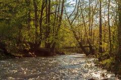 Εθνικό δρυμός του Ντάνιελ Boone Στοκ φωτογραφίες με δικαίωμα ελεύθερης χρήσης