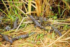 Εθνικό τοπίο πάρκων Everglades στοκ φωτογραφία με δικαίωμα ελεύθερης χρήσης