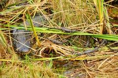 Εθνικό τοπίο πάρκων Everglades στοκ φωτογραφία