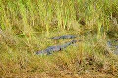 Εθνικό τοπίο πάρκων Everglades στοκ εικόνα με δικαίωμα ελεύθερης χρήσης