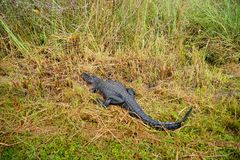 Εθνικό τοπίο πάρκων Everglades στοκ φωτογραφίες