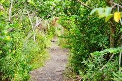 Εθνικό τοπίο πάρκων Everglades στοκ φωτογραφίες με δικαίωμα ελεύθερης χρήσης