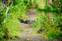 Εθνικό τοπίο πάρκων Everglades στοκ εικόνα