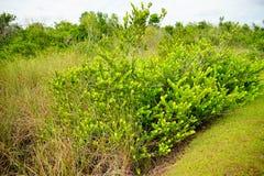 Εθνικό τοπίο πάρκων Everglades στοκ εικόνες με δικαίωμα ελεύθερης χρήσης