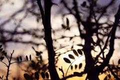 Εθνικό τοπίο πάρκων Saguaro Στοκ φωτογραφία με δικαίωμα ελεύθερης χρήσης