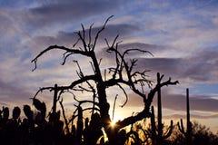 Εθνικό τοπίο πάρκων Saguaro Στοκ Φωτογραφία