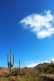 Εθνικό τοπίο πάρκων Saguaro Στοκ Εικόνα