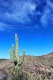 Εθνικό τοπίο πάρκων Saguaro Στοκ εικόνες με δικαίωμα ελεύθερης χρήσης