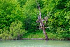 εθνικό plitvice πάρκων λιμνών της Κ&rh Στοκ εικόνες με δικαίωμα ελεύθερης χρήσης