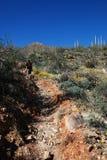 εθνικό saguaro πάρκων πεζοπορώ Στοκ φωτογραφίες με δικαίωμα ελεύθερης χρήσης