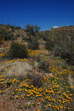 εθνικό saguaro πάρκων Στοκ εικόνα με δικαίωμα ελεύθερης χρήσης