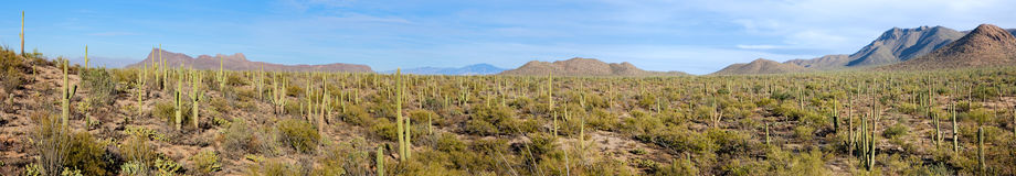 εθνικό saguaro πάρκων Στοκ εικόνες με δικαίωμα ελεύθερης χρήσης