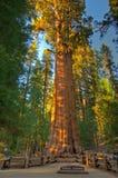 εθνικό sequoia ΗΠΑ πάρκων Καλιφόρ&n Στοκ Φωτογραφίες