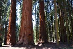 εθνικό sequoia πάρκων εισόδων Στοκ Εικόνες