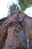 εθνικό sequoia πάρκων εισόδων Στοκ φωτογραφίες με δικαίωμα ελεύθερης χρήσης