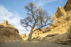 εθνικό sossusvlei πάρκων naukluft της Ναμίμπια φαραγγιών namib sesriem Στοκ φωτογραφίες με δικαίωμα ελεύθερης χρήσης
