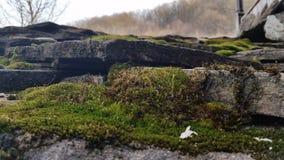Εθνογραφικό σύνθετο ETAR Στοκ φωτογραφίες με δικαίωμα ελεύθερης χρήσης