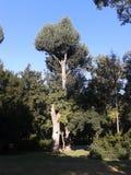 Ειδικά δέντρα στο πάρκο πόλεων της Βουδαπέστης στοκ φωτογραφίες
