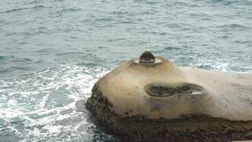 Ειδικοί βράχοι, κεριά θάλασσας σε Yehliu Geopark απόθεμα βίντεο