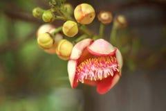 Ειδικό λουλούδι στο δάσος Στοκ φωτογραφίες με δικαίωμα ελεύθερης χρήσης