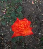 Ειδικό τριγωνικό λουλούδι στοκ φωτογραφίες με δικαίωμα ελεύθερης χρήσης