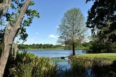 Ειδυλλιακή ρύθμιση βιβλίων ιστορίας του δέντρου που αγνοεί μια λίμνη κοντά στο πανεπιστήμιο της Φλώριδας σε Gainesville, Φλώριδα στοκ φωτογραφίες