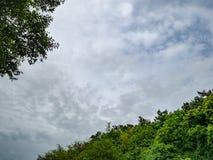 Ειδυλλιακός βροχερός ουρανός με το δέντρο στοκ εικόνες