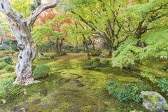 Ειδυλλιακός πράσινος κήπος στοκ εικόνα με δικαίωμα ελεύθερης χρήσης
