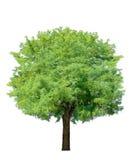 ειδυλλιακό δέντρο στοκ εικόνες με δικαίωμα ελεύθερης χρήσης