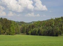 Ειδυλλιακό τοπίο άνοιξη με το πολύβλαστο πράσινο λιβάδι χλόης, φρέσκος Δεκέμβριος Στοκ Φωτογραφίες