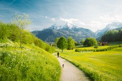 Ειδυλλιακό τοπίο στις Άλπεις με τα ανθίζοντας λιβάδια στην άνοιξη στοκ εικόνα