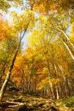 Ειδύλλιο φθινοπώρου Στοκ Εικόνες