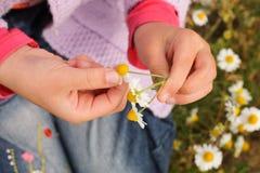 Εικασίες κοριτσιών σε chamomile Στοκ Εικόνα