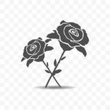 Εικονίδιο τριαντάφυλλων που απομονώνεται στο διαφανές υπόβαθρο Στοκ Φωτογραφία
