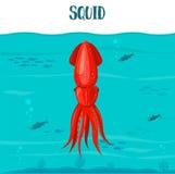 Εικονίδιο καλαμαριών επίσης corel σύρετε το διάνυσμα απεικόνισης Κόκκινο καλαμάρι που απομονώνεται στο μπλε υπόβαθρο νερού Θαλασσ Στοκ Εικόνες