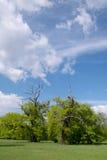 Εικόνα άνοιξη των δέντρων Στοκ Φωτογραφίες