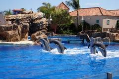 Εικόνα αποθεμάτων του δελφινιού στο Σαν Ντιέγκο Seaworld Στοκ Εικόνα
