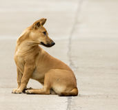 Εικόνα ενός καφετιού σκυλιού στοκ εικόνα με δικαίωμα ελεύθερης χρήσης