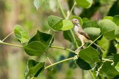 Εικόνα ενός πουλιού που σκαρφαλώνει σε ένα πράσινο φύλλο άγρια περιοχές ζώων Στοκ εικόνα με δικαίωμα ελεύθερης χρήσης