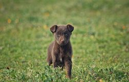 Φύση σκυλιών Στοκ φωτογραφία με δικαίωμα ελεύθερης χρήσης
