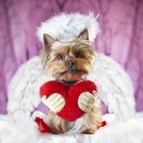 Εικόνα ενός τεριέ του Γιορκσάιρ με μια καρδιά που λέει: να είστε ο βαλεντίνος μου στοκ φωτογραφίες