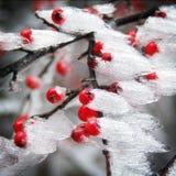 Εικόνα ενός χαρακτηριστικού χειμερινού παγετού Στοκ εικόνα με δικαίωμα ελεύθερης χρήσης