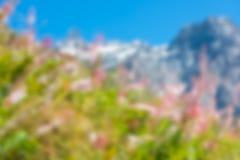 Εικόνα θαμπάδων Defocused των βουνών και των ρόδινων λουλουδιών Στοκ Φωτογραφίες