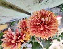 Εικόνα ιδεών κηπουρικής του πορτοκαλιού λουλουδιού στοκ φωτογραφία